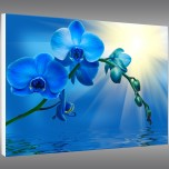 Tableau Forex Orchid�e
